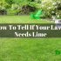 How To Tell If Your Lawn Needs Lime? Researched And Complete Guide